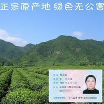 茶叶日照绿茶散装新茶自产有机茶叶特产直销2015春茶特价包邮绿茶
