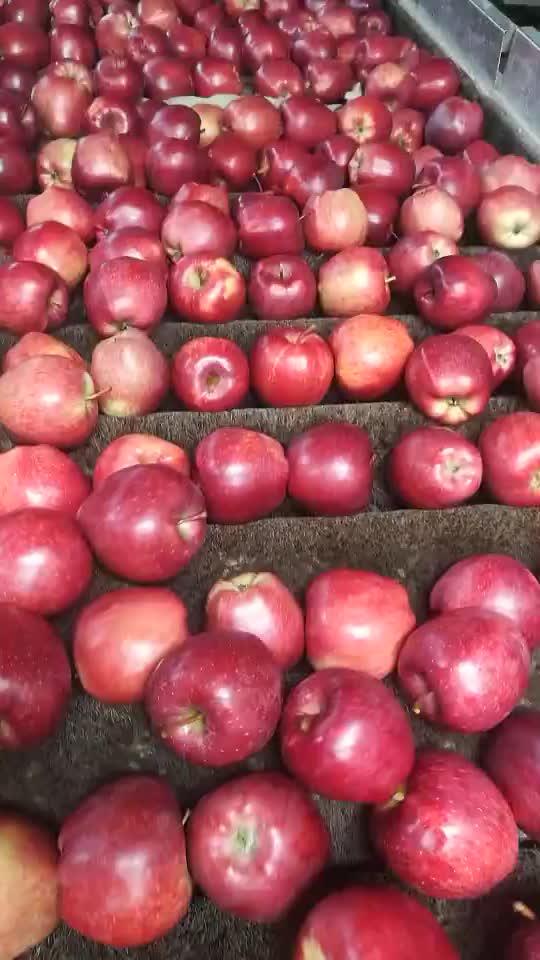 신선한 사과/중국어 사과
