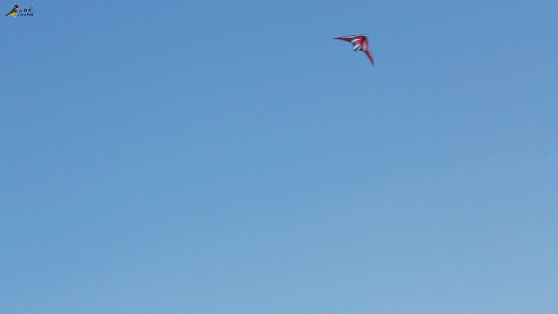 Dual line stunt kite