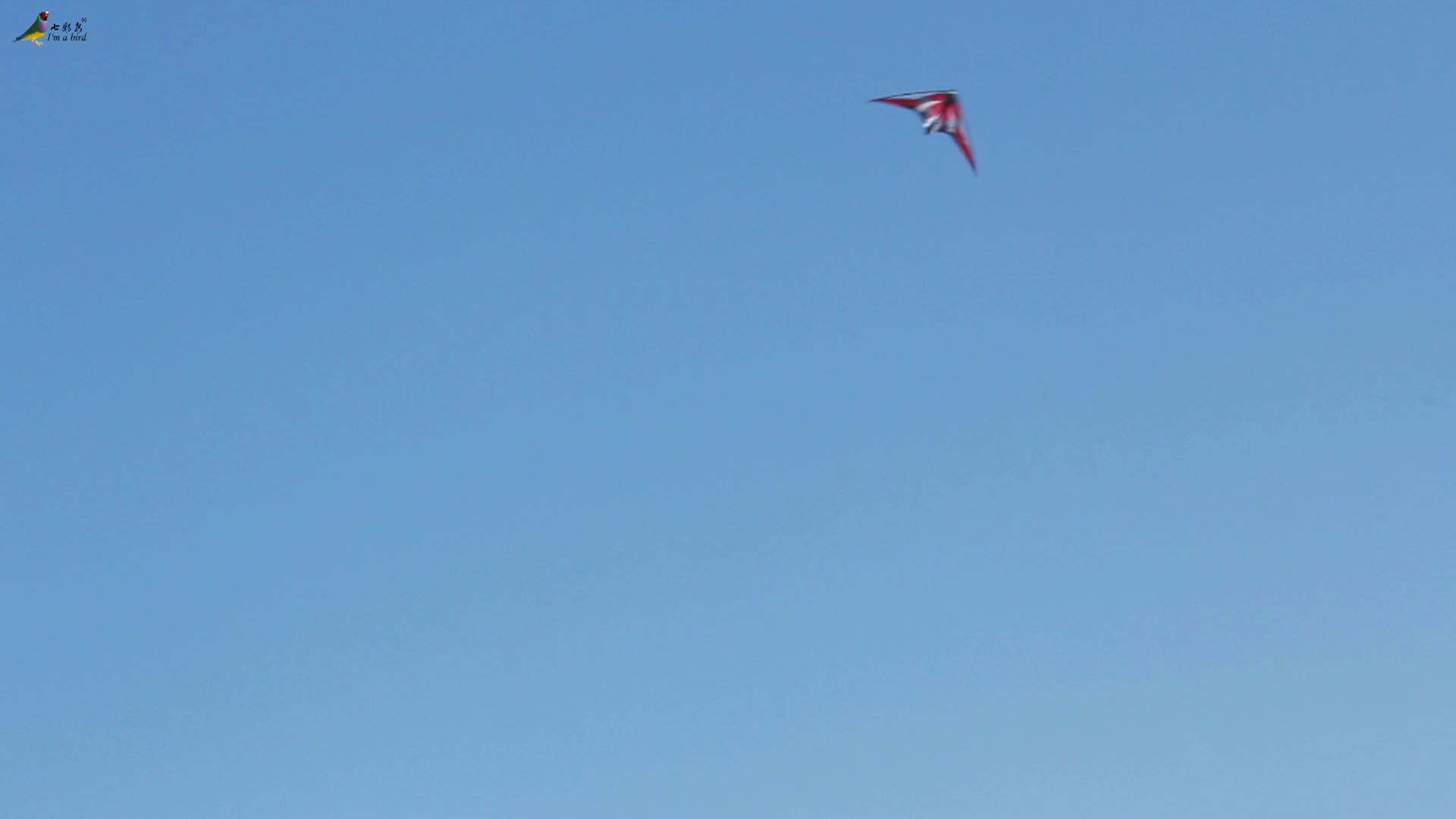 Atacado Outerdoor Esporte Novo 47 polegada Linha Dupla Stunt Papagaios Para Venda