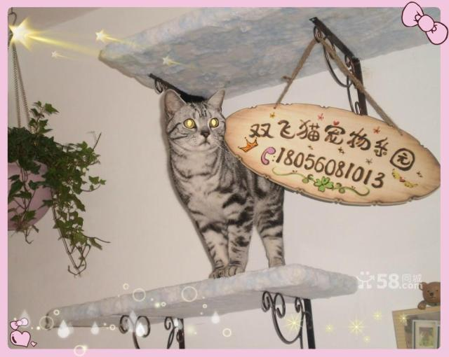 Flying cat pet Park Hefei cat professional family foster care cat cats a foster pet Butler