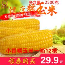 12根小香糯2018新黄糯玉米真空包装东北粘苞米微甜黏嫩香非白