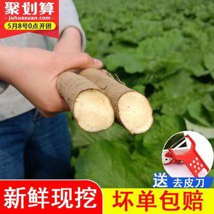 现挖牛蒡新鲜农家5斤牛蒡茶牛蒡根丝片原料生鲜牛旁蔬菜野生