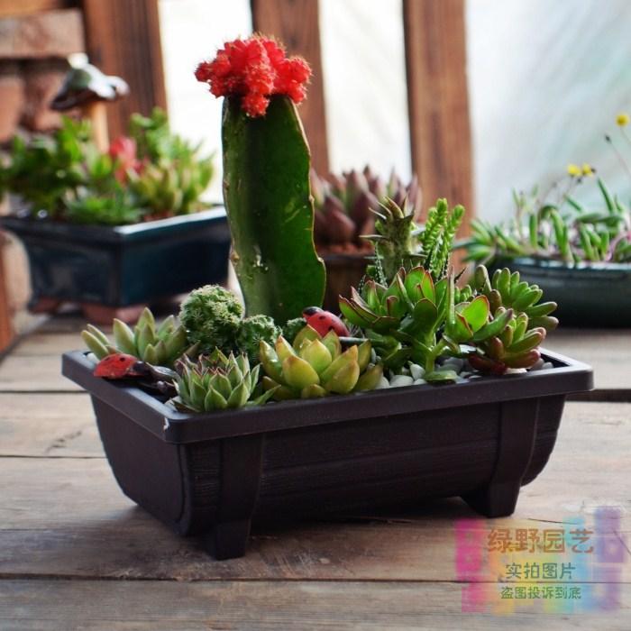Горшечные растения Green