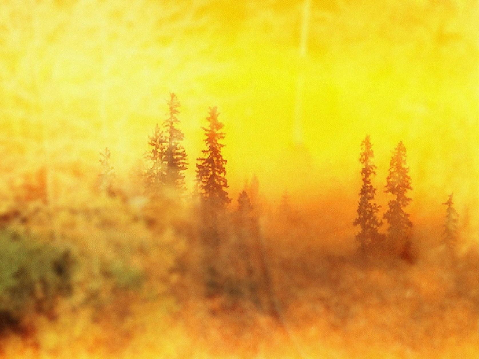 黄色片树林系列_装饰画 油画 客厅 欧洲画风景画无框画珂罗版雾笼罩的树林黄色调