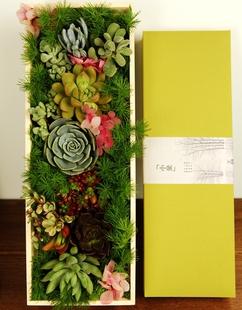 多肉植物礼盒