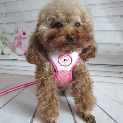 abpet pet harness with mini pet leash dog leash dog chain dog Shengshu appropriate