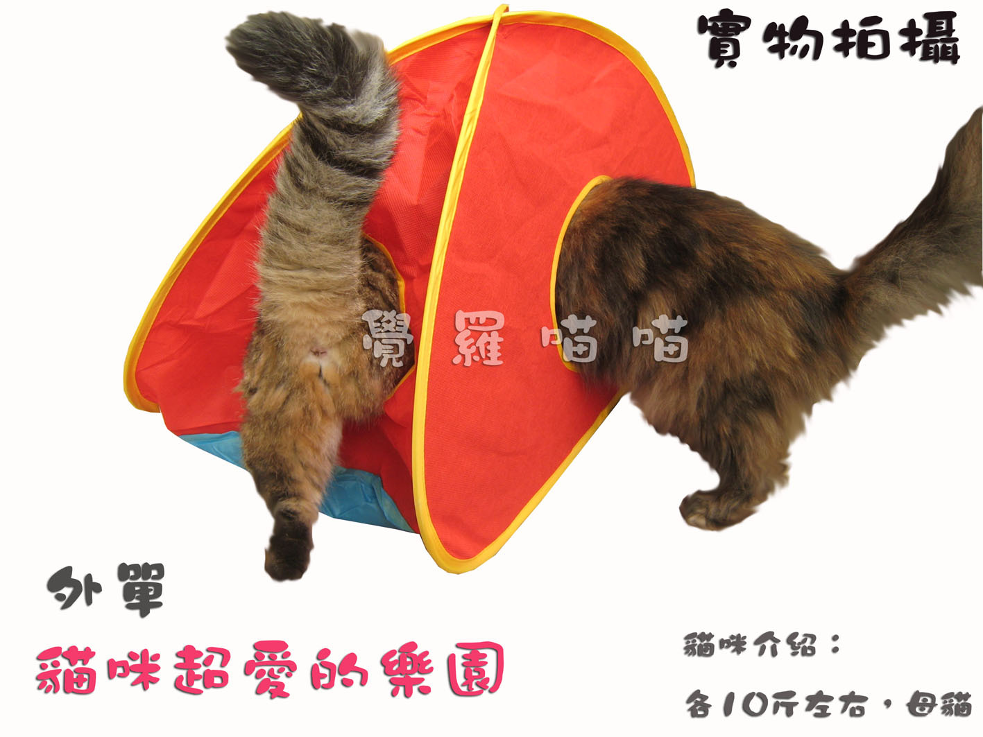Лежанка для животных * Jue Luo Кот магазин «Европа и синхронизированы» кошки красота света палатки замок палатка собака кошка туннель земле играть