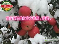 2016现摘红富士苹果山东烟台水果栖霞大苹果80#5斤孕宝包邮