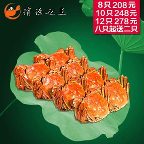 阳澄湖大闸蟹六月黄鲜活螃蟹2.4-2.7两单只现货满8只起送2只