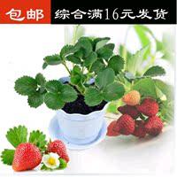 【天天特价】盆栽阳台草莓苗果树苗 草莓苗套餐
