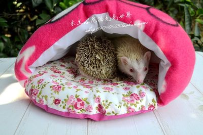 Magnolia hemp * African mini hedgehog chinchillas big thick cotton oversized cat litter KT / sleeping bag