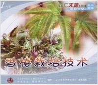 香椿种植技术视频大全/香椿栽培技术(3个光盘+3本书)正品包快递