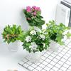 发财树绿萝栀子常春藤吊兰芦荟办公室小盆栽室内花卉绿植水培植物