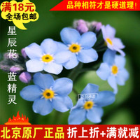星辰花 蓝精灵 30粒原厂彩包装 种子 花种子 蔬果种子 花卉种子