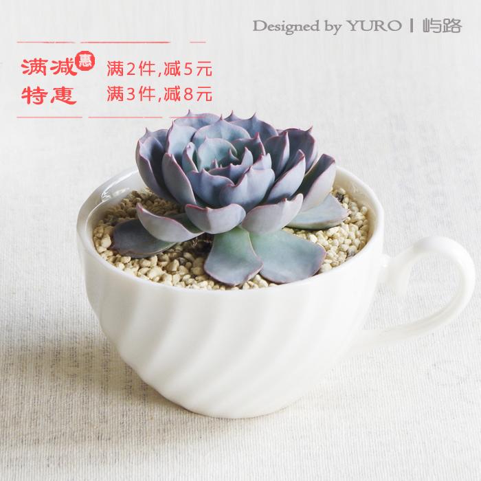 屿路多肉植物盆栽创意七夕情人节礼物奇趣办公室绿植满68包邮