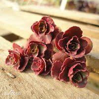 多肉植物小苗 小球玫瑰 多肉批发  小型种 特价 可爱肉肉 绿植