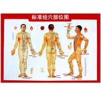 标准人体穴位图大挂图 全身针灸经络图 艾条艾柱随身灸艾灸盒特价