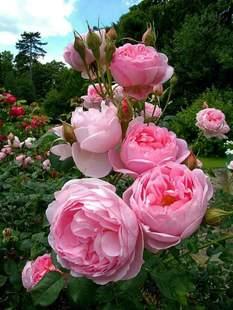 印花粘贴十字钻石满绣5D牡丹玫瑰花月季花客厅卧室工作室壁画