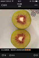红阳红心弥猕猴桃 新鲜水果 绿心 大果 奇异果5斤 全国包邮